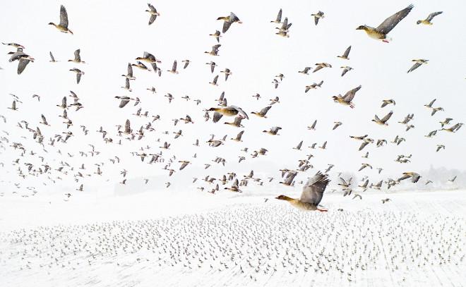 Международный конкурс аэрофотографии Drone Photo Awards 2021 назвал победителей (фото 4)